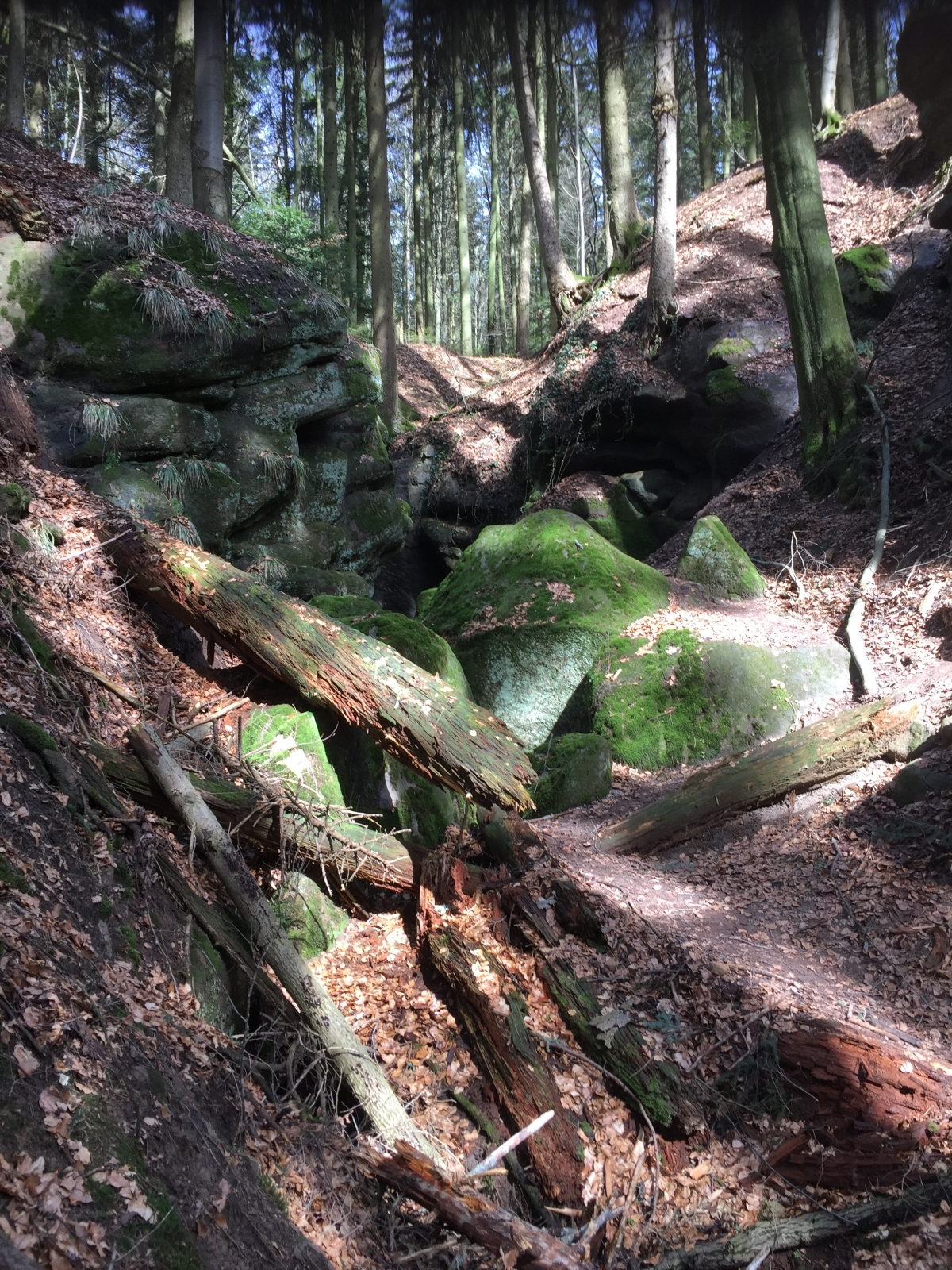 Gallenrotte am Ebnisee